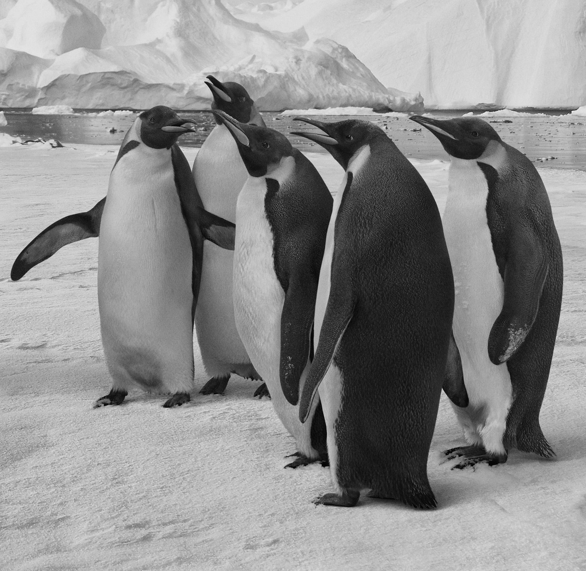 Loro Piana-pinguini remap web