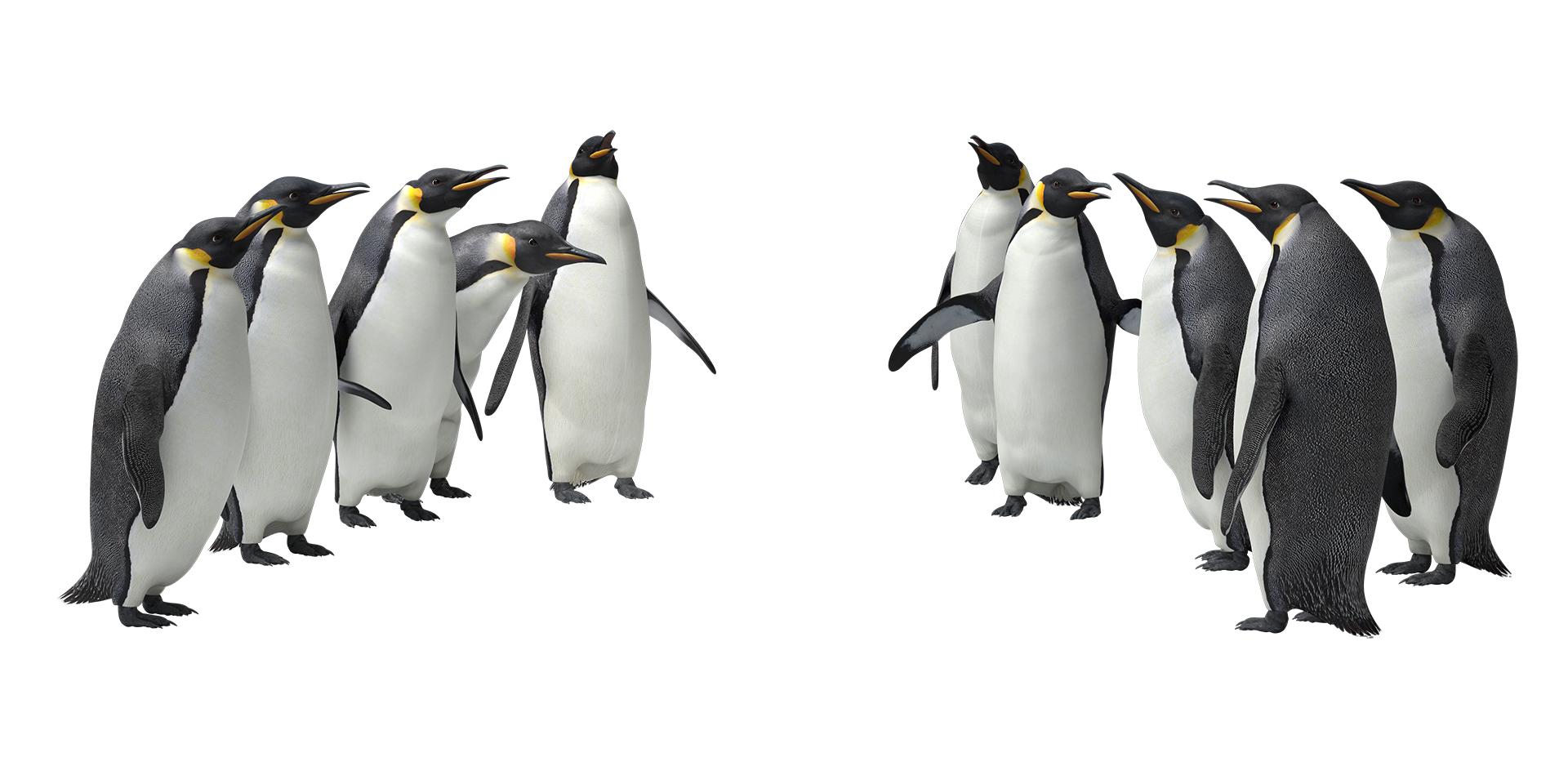 pinguini_V4_separati web