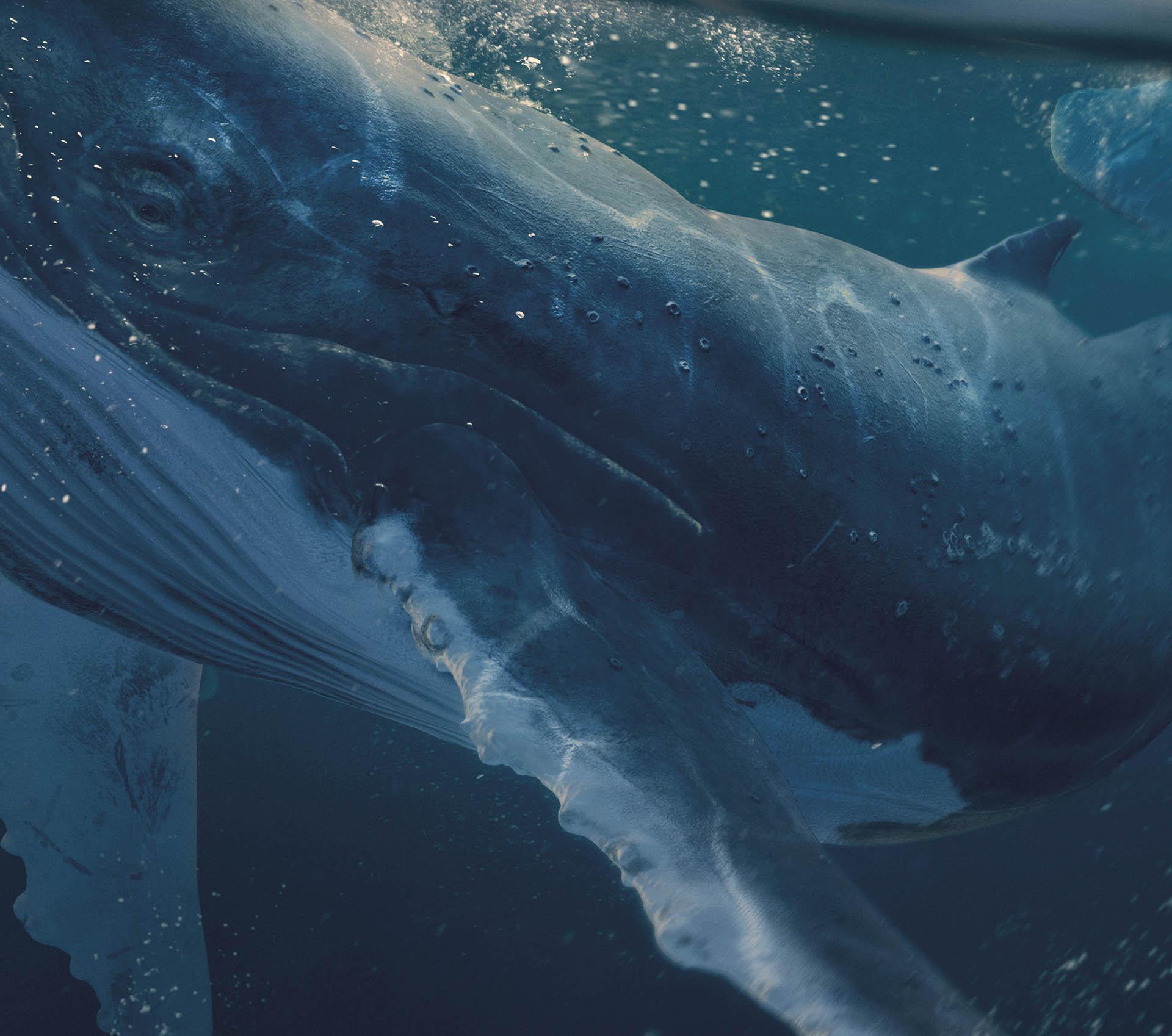 balena5